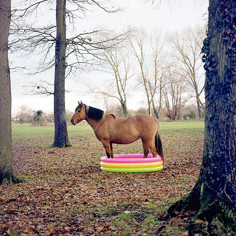 Horse768sq